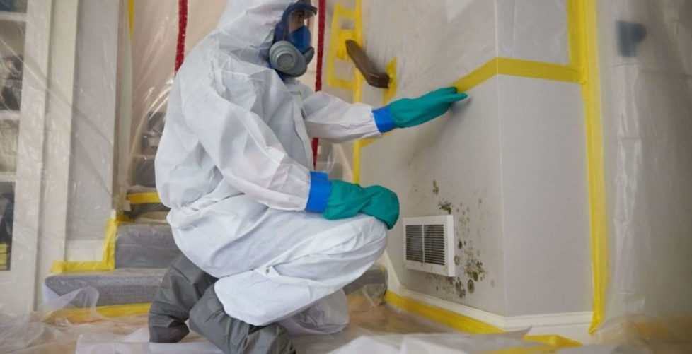 mold_cleanup_ctr